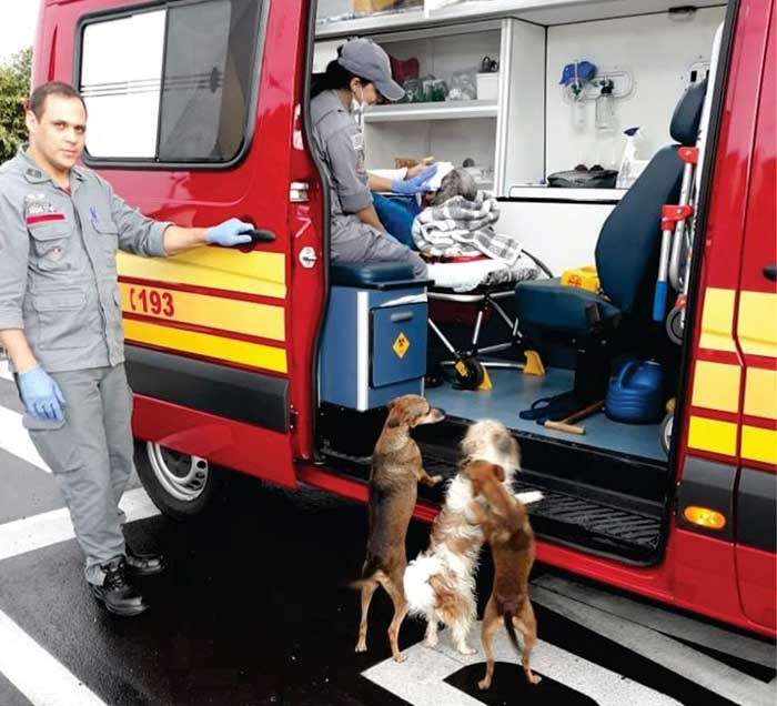 Cães ficam desesperados e tentam entrar em ambulância dos bombeiros para acompanhar vítima de queda